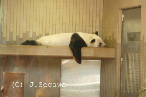 panda-02