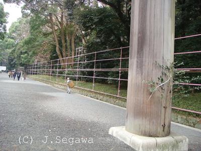 toshinose-03