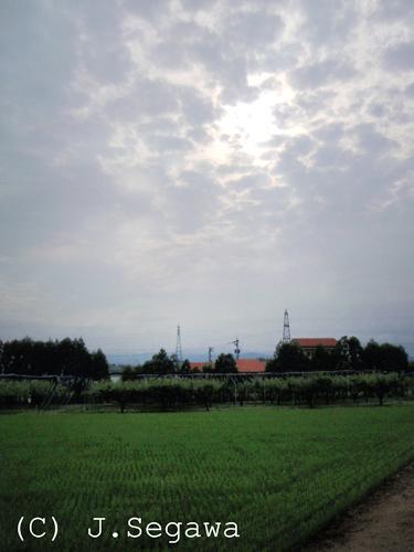 tsuyu-01